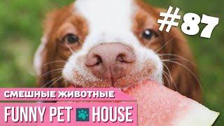 СМЕШНЫЕ ЖИВОТНЫЕ И ПИТОМЦЫ #87 АВГУСТ 2019   Funny Pet House