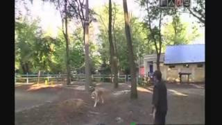 Электронный ошейник для дресировки собак