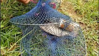 Siêu cần thủ câu Cá La Hán lai Cá Rô Phi Hồ Đá Làng Đại học TP HCM