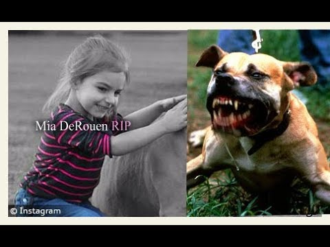 Dangerous Dog Attack Interview: Huge Pitbull attacks and Kills 3 year old girl
