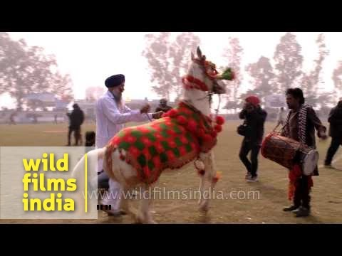 The annual horse dancing contest : Punjab