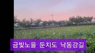 아름다운 금빛노을 무인카페ㅡ부산강서구 봉림동 낙동강 아…