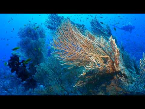 Dive with Extra Divers Makadi Bay @ Panorama Reef South Plateau 4K