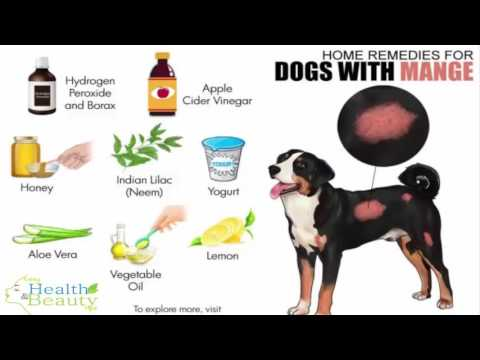 Home remedies for dog demodex