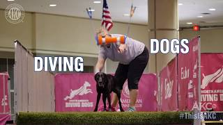This is Diving Dogs - AKC National Championship 2018