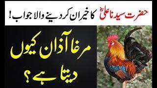 murgh azan Kiyo Deta hai || مرغا آزان کیوں دیتا ہے  || Murgh Baang || Hazarat Ali Says