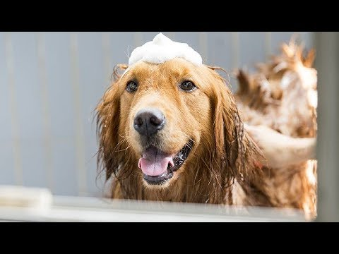 Dogs Hates Being Wet After Bathing Compilation