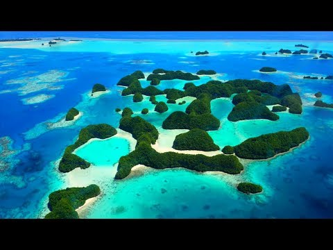 PALAU | Diving with SHARKS!