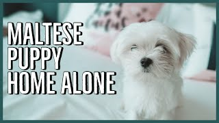 What Happened When I Left My Maltese Puppy Home Alone **WARNING: EMOTIONAL**