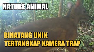 Binatang Unik Tertangkap Camera Trap | Unique Animals Caught on Camera Traps