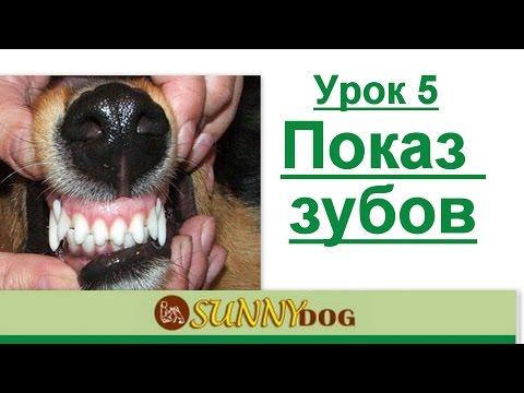 Показ зубов как