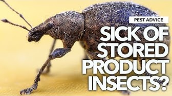 A-Z of Pests: Pest advice for Controlling Stored Product Insects (SPIs)