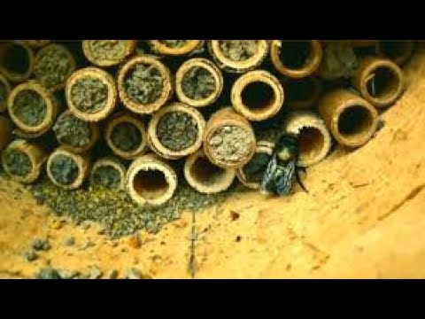 Mason Bee house building, drilling the holes