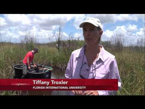 Florida's Everglades face new invasive threat: rising sea levels