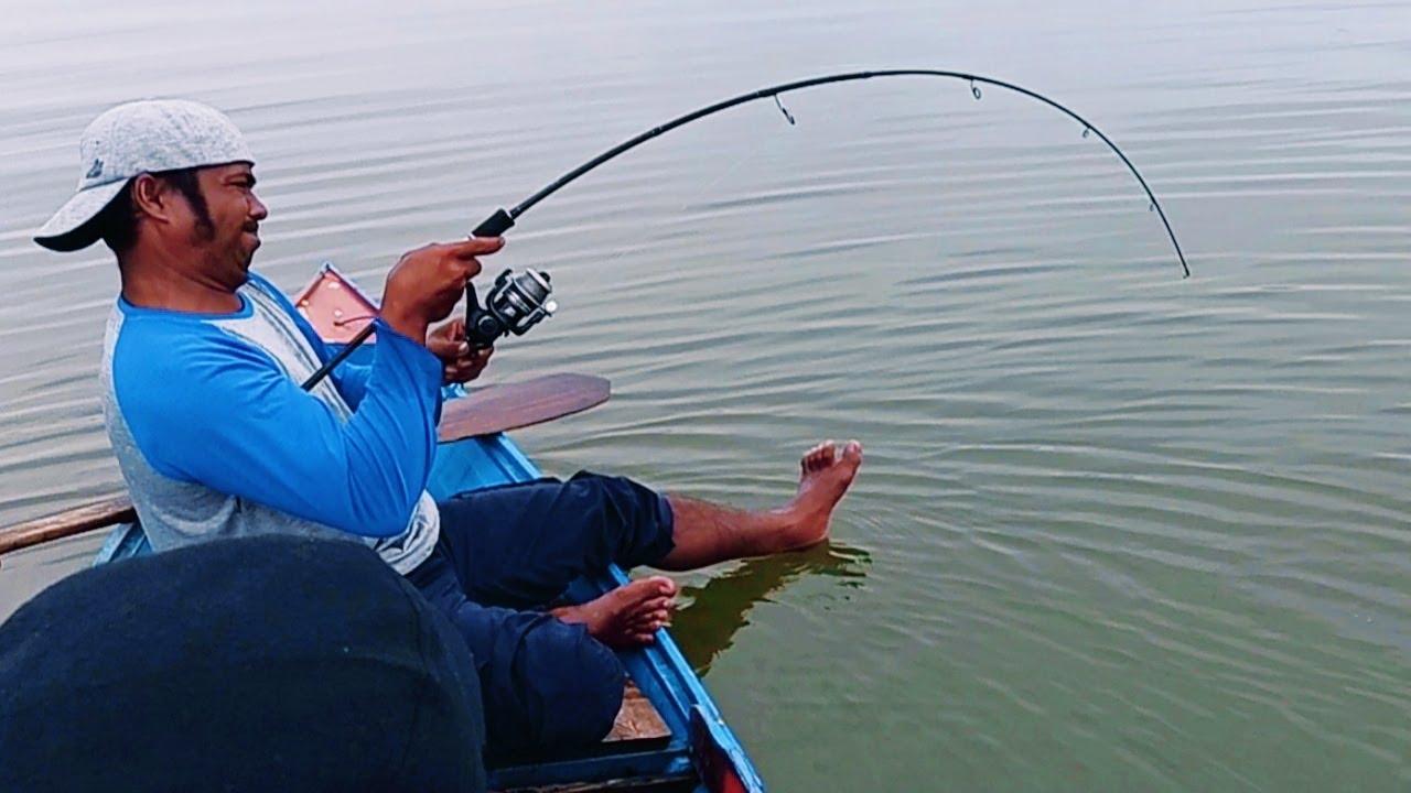Asik Sampai Melengkung Di Tarik Ikan Besar, Mancing Menggunakan Umpan Udang Hidup