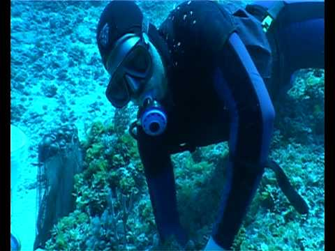 Hand Collecting Emperors, Triggers And Butterflies In The Coral Sea