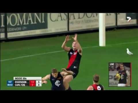 Goddard gets air time - AFL