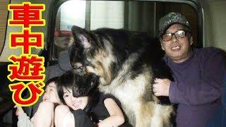大型犬と遊ぼう、犬は友達 孫達の週一わんわんちゃんねる・・日産セレナ...