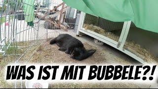 WAS IST MIT BUBBELE?! | AnKat