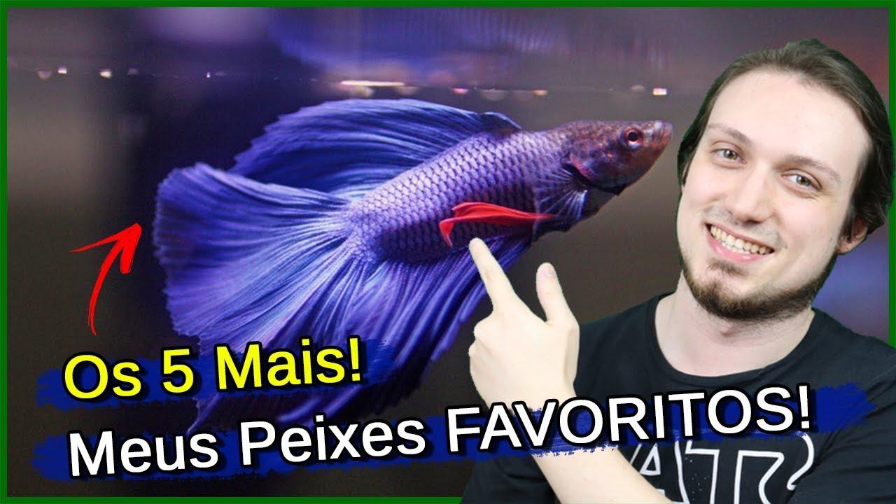 Os 5 peixes FAVORITOS do Amantes do Aquarismo!