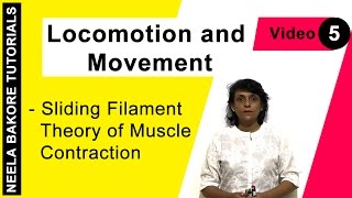 Locomotion and Movement - Sliding Filament Theory of Muscle Contraction