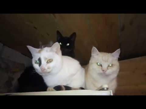 Вопрос: Почему зоозащитники не отдают кошек и собак в частные дома?