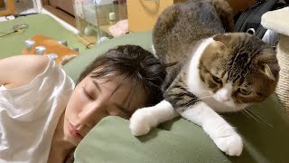 お疲れママVS甘えたい親子猫