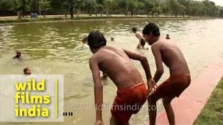 Repeat youtube video Young boys jump into the India Gate pond, in summer