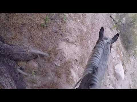 Marble Creek in the Frank Church Wilderness - With Reeba the Mule