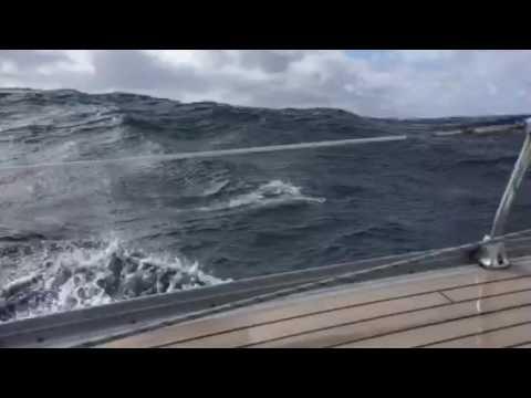 Elite sailing - Dolphin