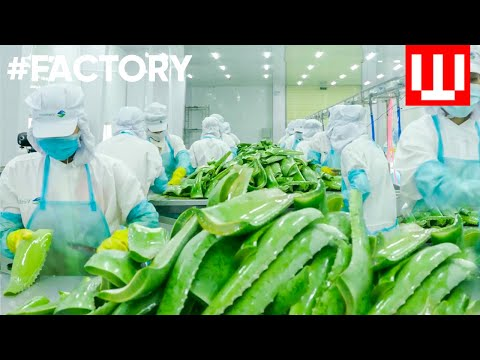 How To Make Natural Cosmetics | Organic Cosmetic Factory Tour