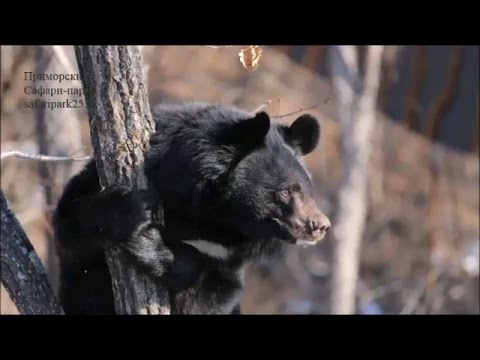 сайт знакомств медведей