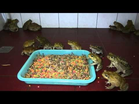 Marine Toad Farm