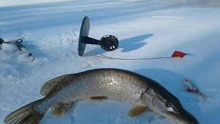 Попал на клёв щуки За уловом на дальняк Рыбалка на жерлицы удалась