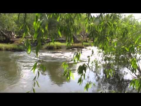 Huge Crocs At The Keep River