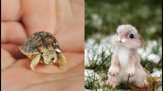 Cute Baby Animals Videos Compilation Cute Moment Of The Animals Cutest Animals   Soo Cute 2