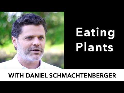 Eating plants versus other live organisms [Interview with Daniel Schmachtenberger]
