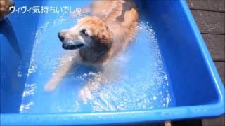 http://juucyi.blog63.fc2.com/ プールに水を溜めても毛むくじゃらのサ...