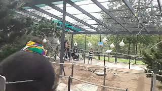 Quick visit-turtle back zoo