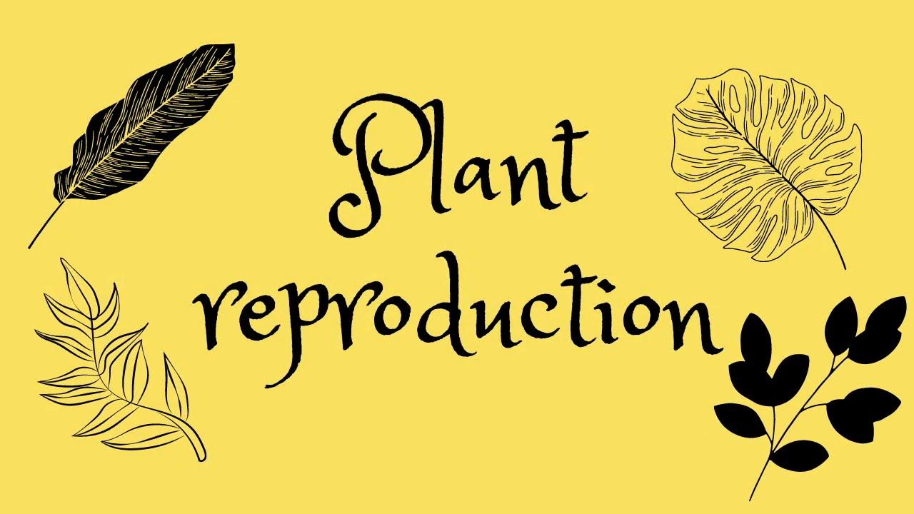 KS3 plants&cell science Biology: Plant Reproduction :D ...