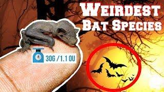 WEIRDEST Bat Species