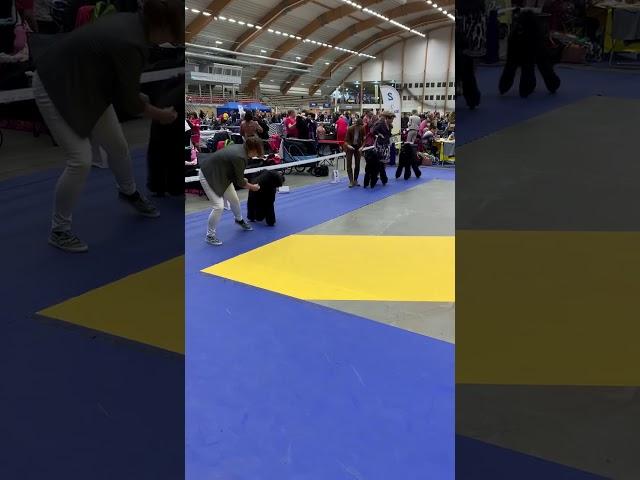 Kira o Rosette 1:a och 2:a båda med CK Sundsvall okt-19 juniorklass.