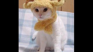 Самое смешное видео про котят смотрите сейчас!