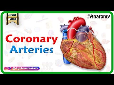coronary-arteries-anatomy-/-blood-supply-of-heart-/-arterial-supply-of-heart-:-animation