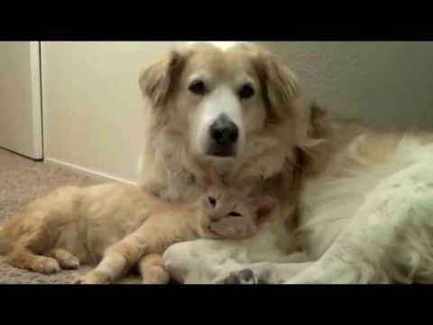 Hund Und Katze Zwei Gute Freunde