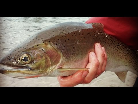 Worm Fishing For Big Cutthroat Trout (Bigfork Montana)