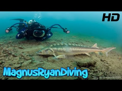 Capernwray diving centre 2016 youtube for Dive centres