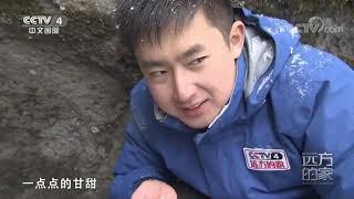 [远方的家]行走青山绿水间 温泉边的瓶尔小草  CCTV中文国际