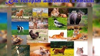 Как говорят животные и птицы. Звуки животных и птиц
