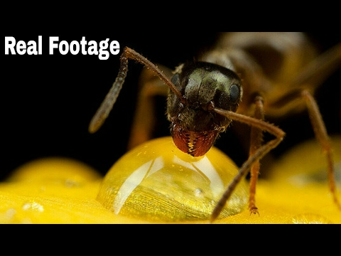 How To Do Micro Photography With Your Mobile Phone